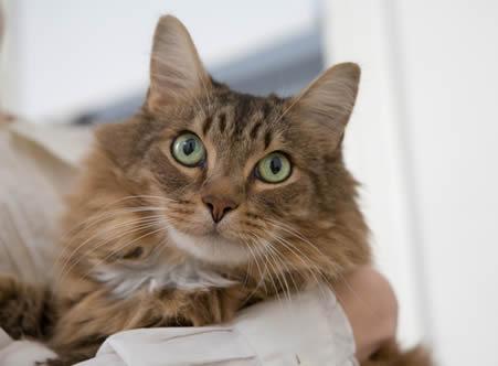 Pet Friendly Apartments for rent